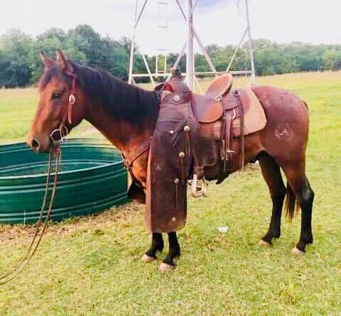 He sure is doing great being a ranch horse, learning the hard jobs before he gets to start the easy ones! 😉