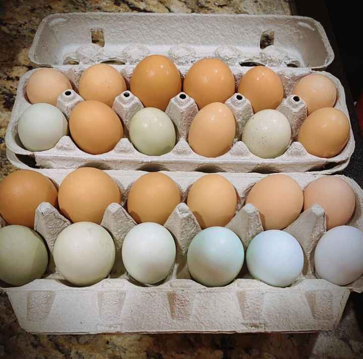 Our rainbow is nearly complete as our youngens have begun laying well!! ❤️❤️❤️ These eggs are gorgeous and sheer happine...