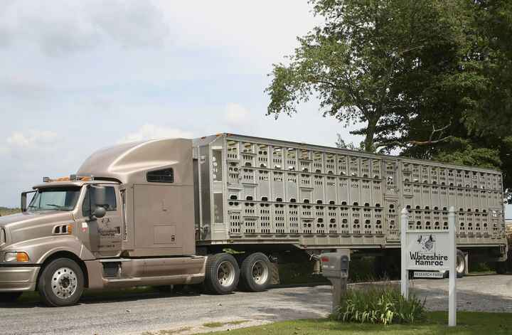 We're looking for a full-time Transportation Driver at our sow farm in Albion, IN. In this position, you'd be loading an...