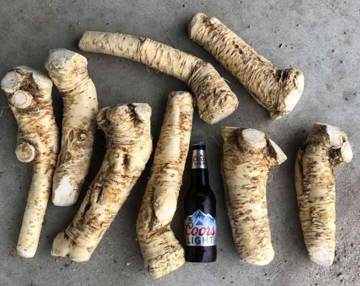Here are some big hot roots. That's not a pony bottle lol.   🔥🔥🐎🍺