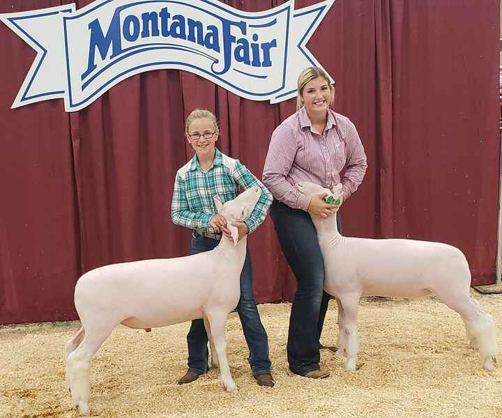 1st and 2nd place Dorset lamb at the Montana Fair in Billings.
