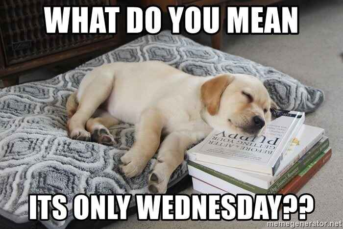 Its WOOF WEDNESDAY!! That means we have some more fun facts to help you through the rest of this RUFF work week!😴🐾💼#1 Do...